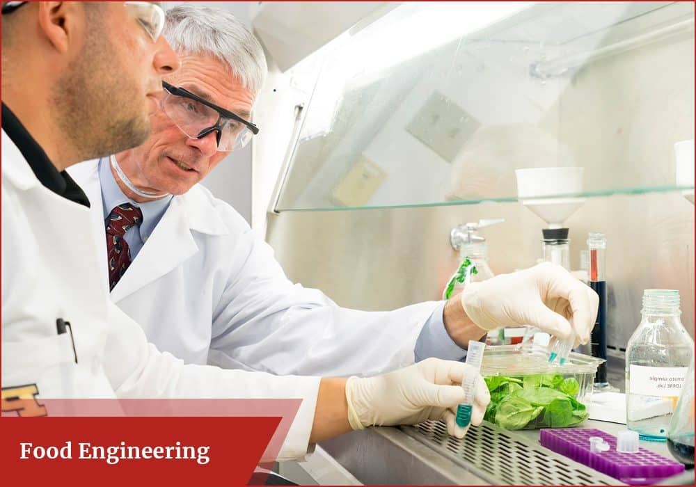 What is food engineering